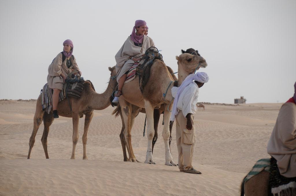 Resultado de imagen para fauna en tunez