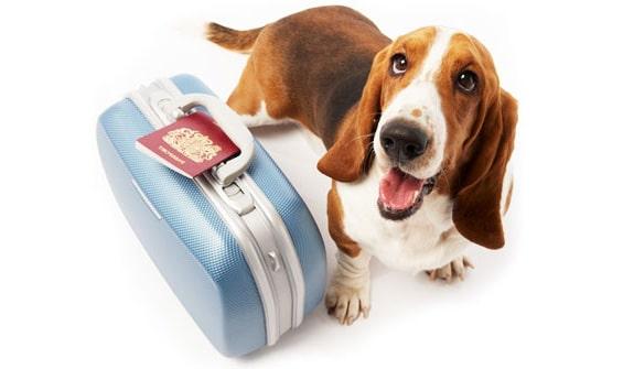 viajar-con-tu-mascota