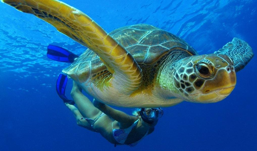 Tortuga marina y buceadora