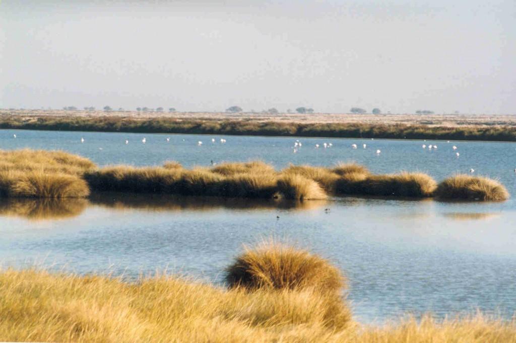 marisma Doñana