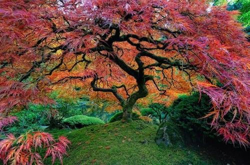 Los 16 tipos de rboles m s incre bles del mundo for Arboles bonitos de jardin