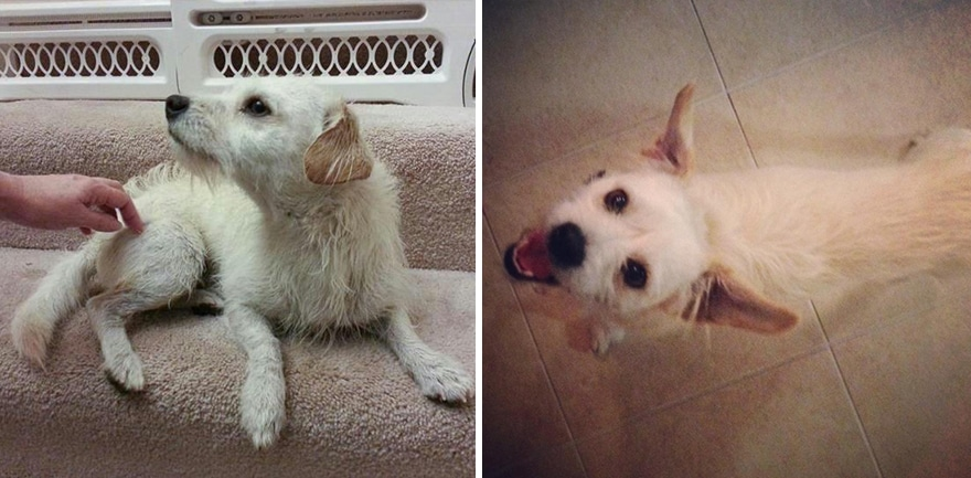 pet-adoption-before-and-after-16__880