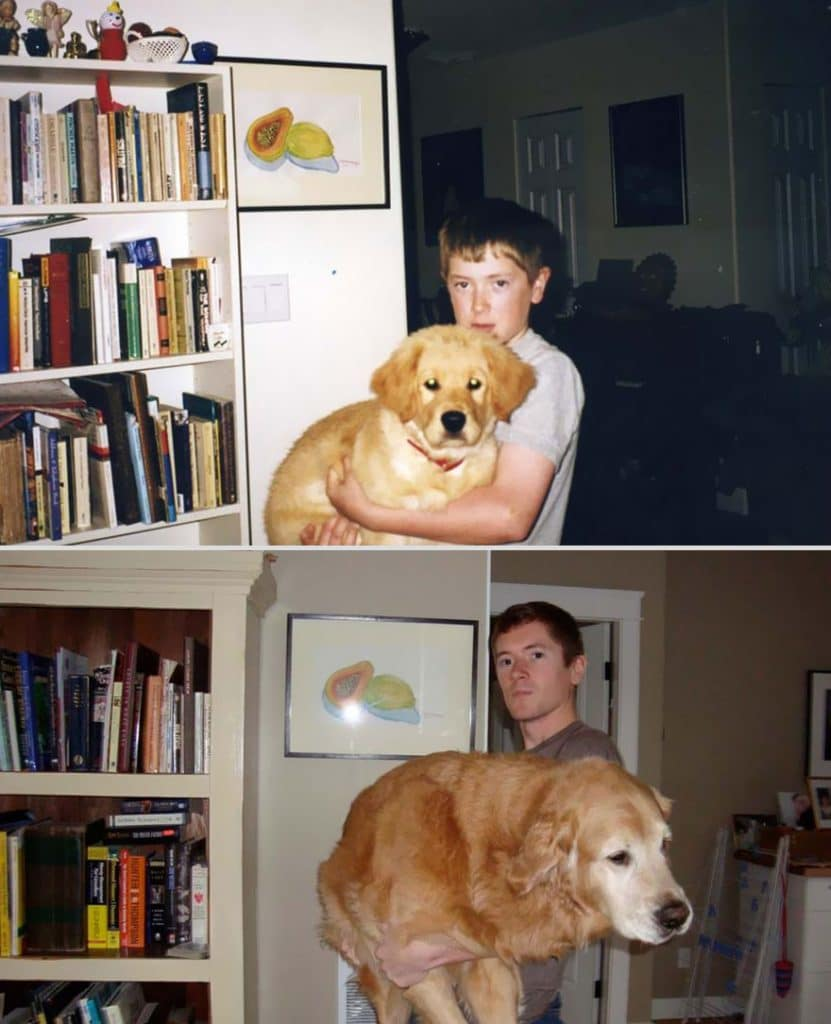 pets-before-after-22