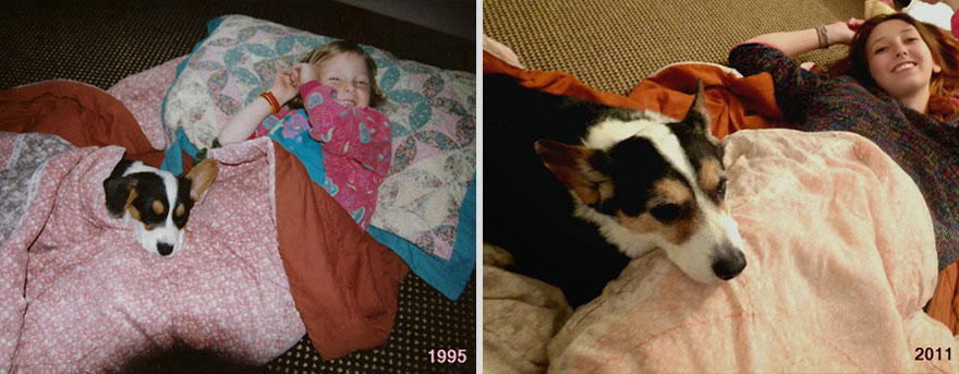 pets-before-after-33