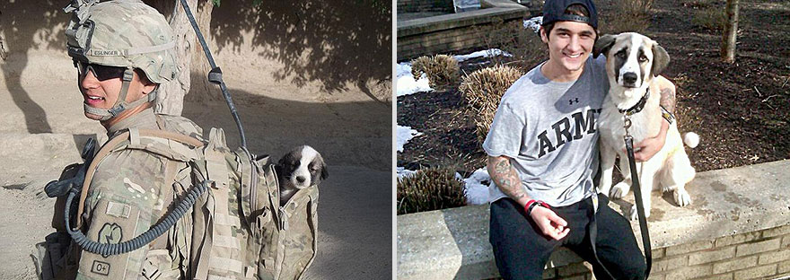 pets-before-after-5