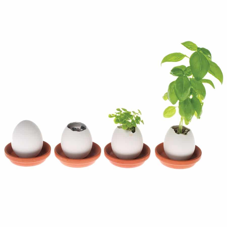 Eggling_Plant_123
