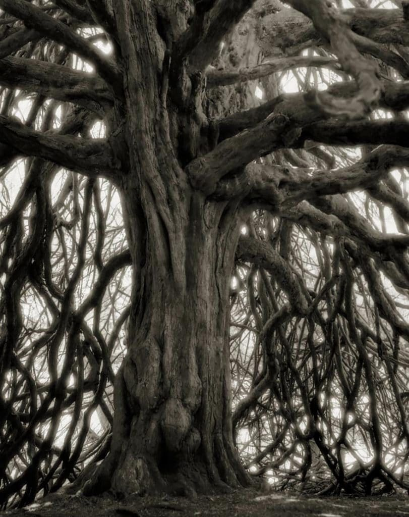 ancient-trees-beth-moon-18