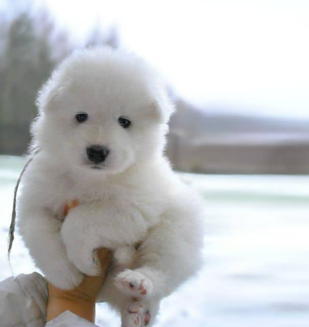 chubby-puppies-bear-cub-look-alikes-14__605
