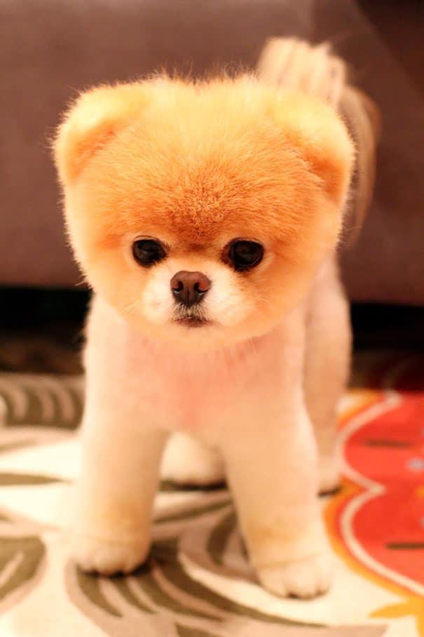 chubby-puppies-bear-cub-look-alikes-8__605