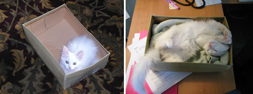 before-and-after-growing-up-cats-111__880