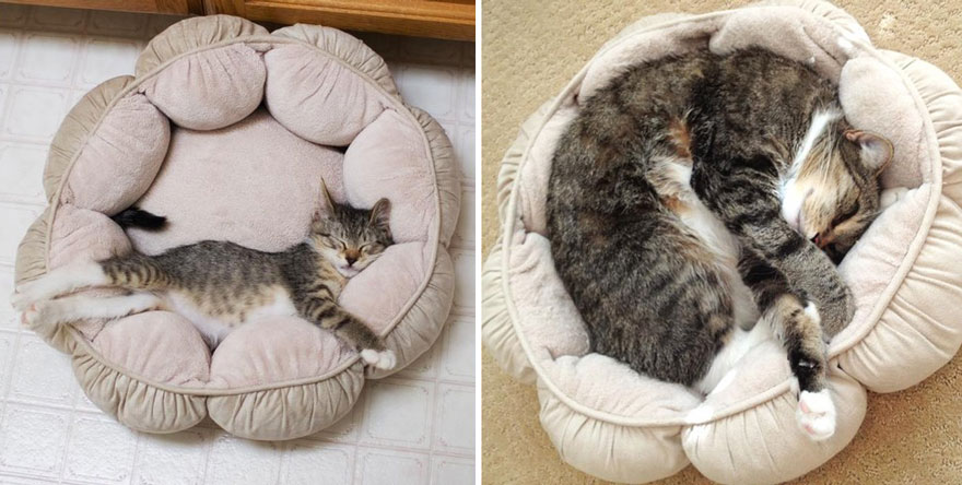 before-and-after-growing-up-cats-11__880