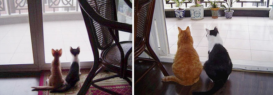 before-and-after-growing-up-cats-33__880