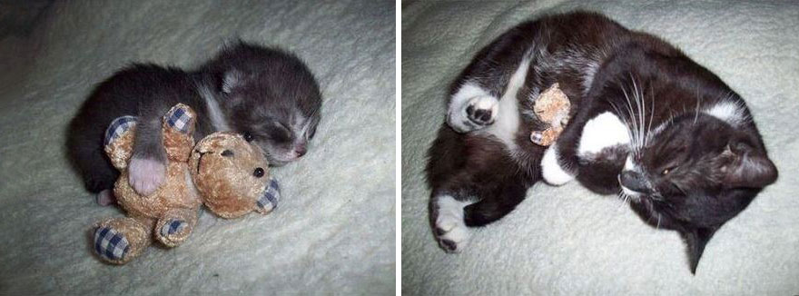 before-and-after-growing-up-cats-4__880