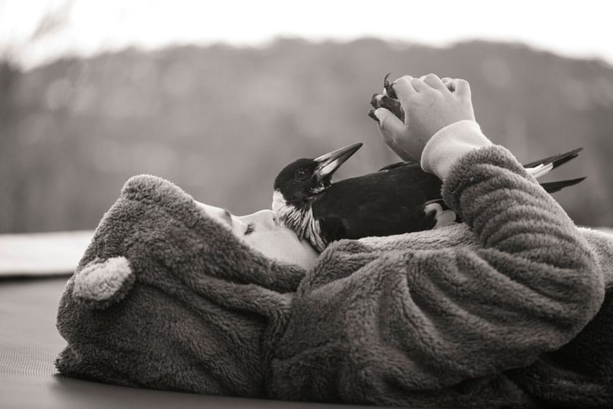 penguin-magpie-rescue-friendship-bloom-family-australia-17