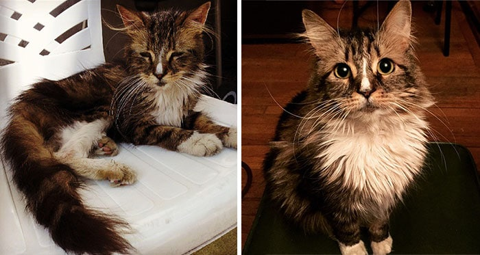 rescue-cat-abandoned-before-after-44__700