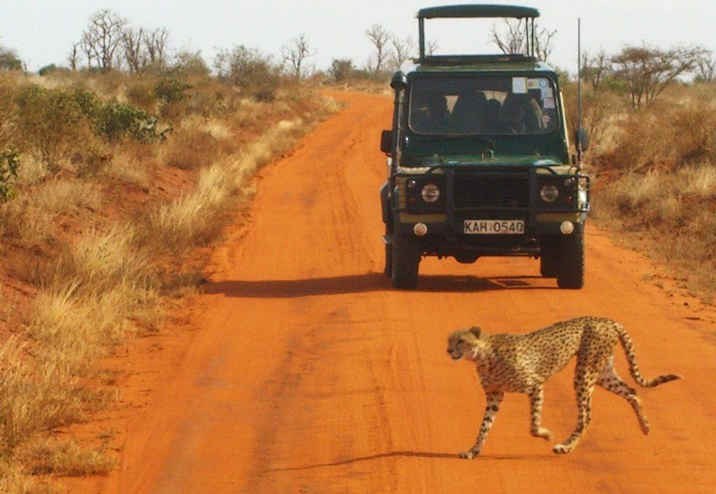 safari viajar aventura
