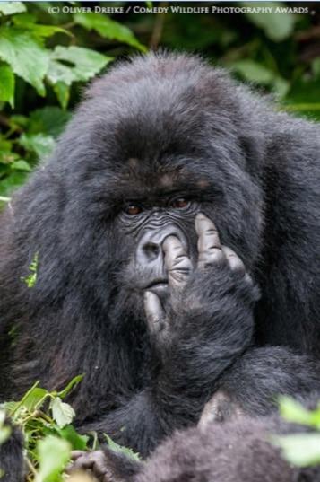 Las fotos de animales más divertidos de todo el mundo las puedes ver aquí
