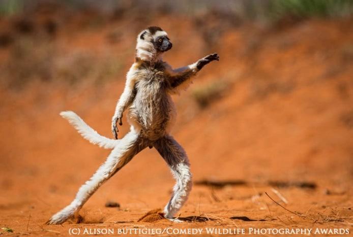 Las fotos divertidas de animales siempre triunfan