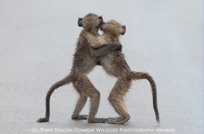 Hay que compartir amor y alegría cada día igual que estos dos animales pequeños