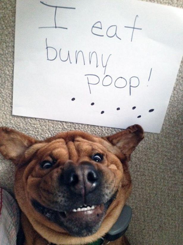 fotos animales graciosos
