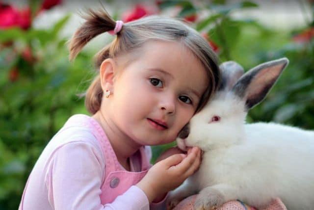 Razones para adoptar animales