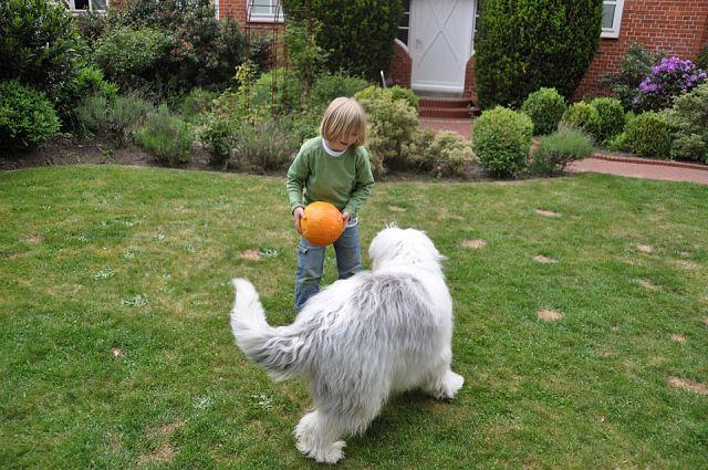 Adoptar perro y gato