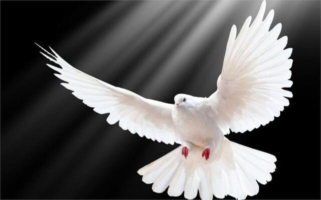 fotografia paloma blanca significado del color blanco
