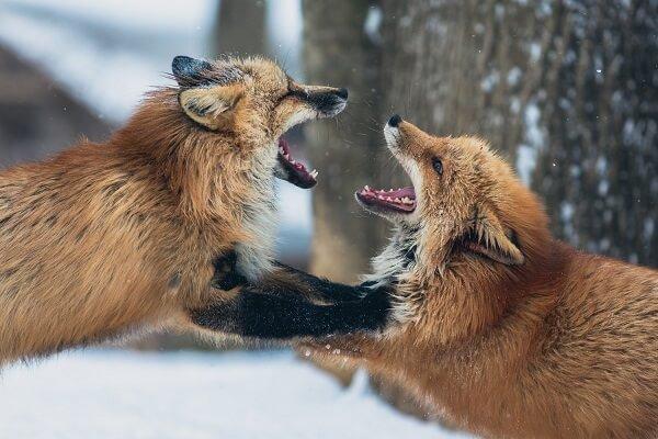 insultos sutiles e inteligentes en pelea